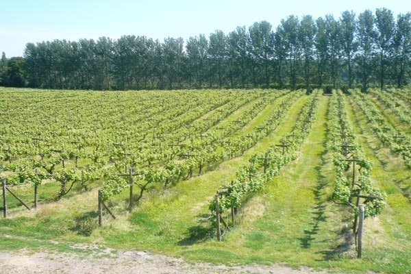 Click to view details and reviews for Vineyard Tour And Tasting For Two.