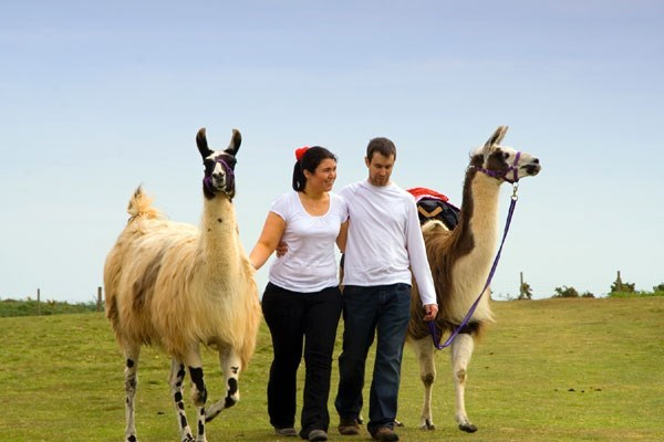 image of Llama Trekking and Cream Tea for Two