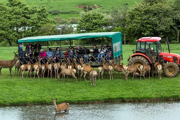 image of Family Day on The Farm with a Deer Safari at Snettisham Park
