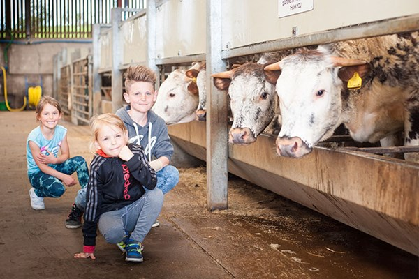 Animal Keeper Experience for One at Thornton Hall Country Park