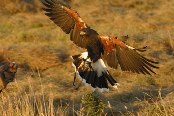 Hawk Walk in Derbyshire