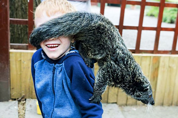 Half Day Zoo Keeper Experience for Two at Wills Wild Animal Encounters