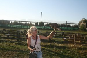 Click to view details and reviews for Birds Of Prey Experience In Kent.