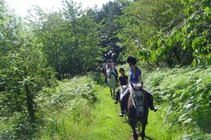 Click to view details and reviews for Riding Hack At Bilsdale Riding Centre.