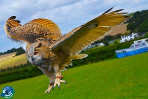 Click to view details and reviews for Entry To Cjs Birds Of Prey Experience For Two Adults And Two Children.