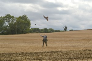 Click to view details and reviews for Full Day Falconry Experience At The Falconry School.