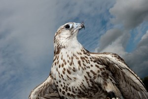 Click to view details and reviews for Half Day Falconry Experience At The Falconry School.