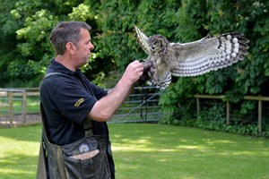 Click to view details and reviews for 2 For 1 Hawk Walk For Two At Hawksflight Falconry.