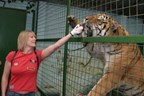 2 for 1 Feed the Big Cats by Hand Special Offer