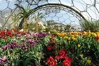 Mediterranean Biome Private Tour for Two at The Eden Project