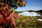 Chocolate and Chilli Private Tour for Two at The Eden Project