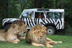 VIP Safari Tour at Longleat Safari Park (Adult)