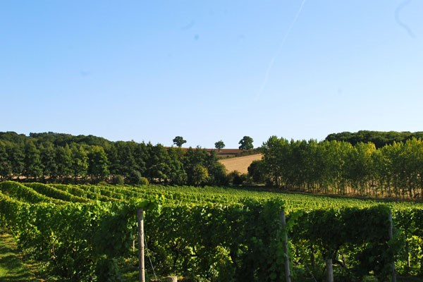 Chilford Hall Vineyard Tour and Tasting with Lunch for Two in Cambridgeshire