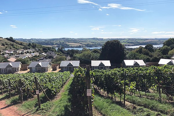 Old Walls Vineyard Tour and Tasting in Devon with Lunch for Two