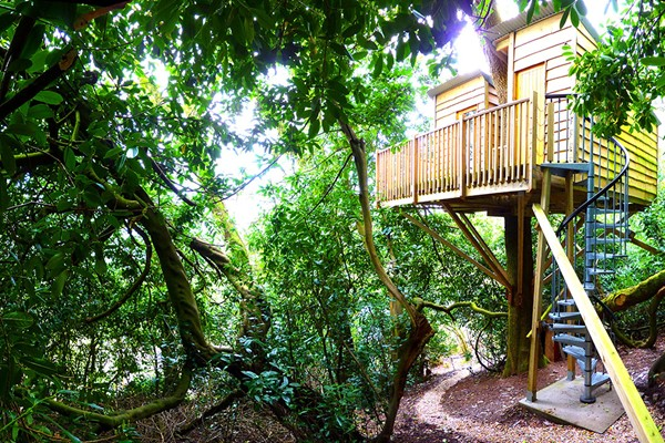 Two Night Stay in The Nest Tree House