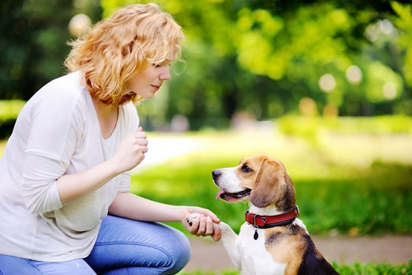Online Pet Sitting and Dog Walking Diploma Course for One