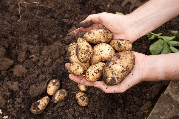 Online Expert Royal Horticultural Society Level 2 Plant Nutrition and Roots Course for One