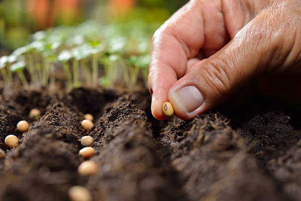 Online Peer Royal Horticultural Society Level 2 Plant Nutrition and Roots Course for One