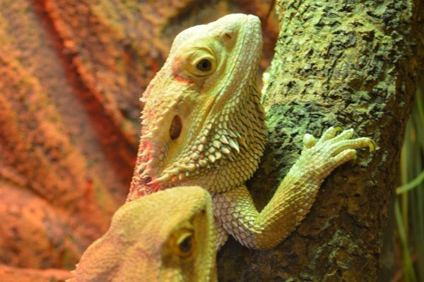 Meet the Reptiles for One at Paradise Wildlife Park