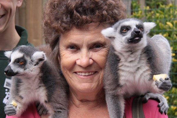 Meet the Lemurs Experience at Paradise Wildlife Park