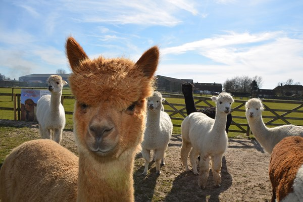 Family Adventure at Alpaca Annie