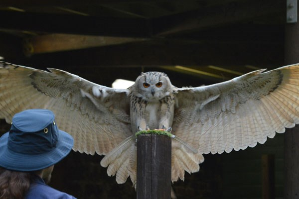 Entry To The Scottish Owl Centre For Two Adults   Kids Go Free