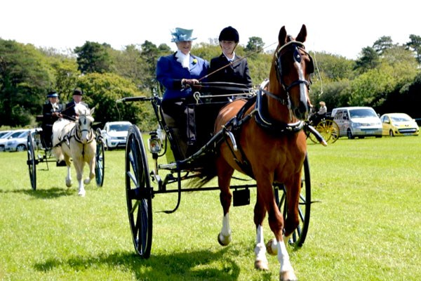 Learn to Drive a Horse and Carriage at Easter Hall Park