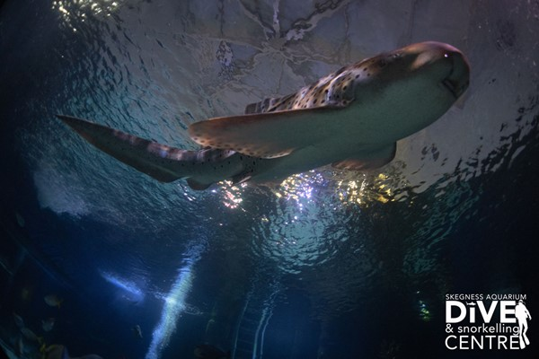 Diving with Sharks Experience at Skegness Aquarium - Special Offer