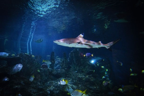 Diving with Sharks Experience for Two at Skegness Aquarium