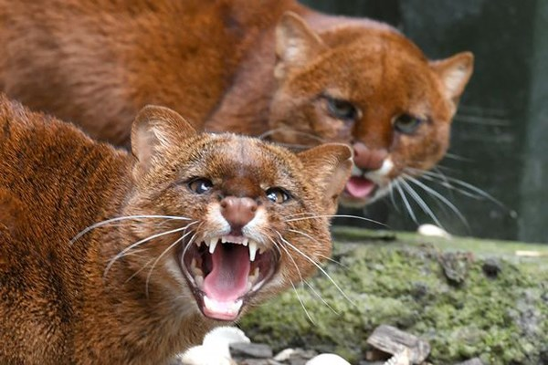 Zookeeper Experience for Two at Ark Wildlife Park