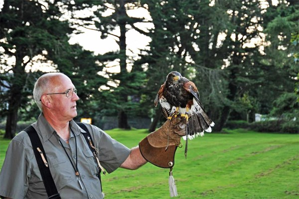 Birds of Prey Experience for Two at North Devon Falconry