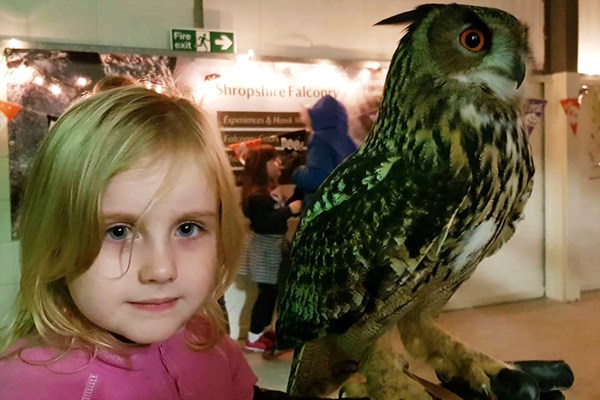 Owl Flying and Handling Experience at Shropshire Falconry