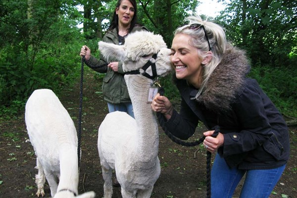 90 Minute Alpaca Walk for Two with Charnwood Forest Alpacas