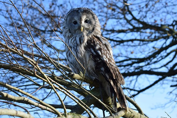 VIP Owl Experience At Sussex Falconry
