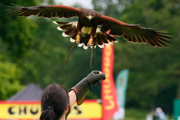 VIP Falconry Experience at Sussex Falconry