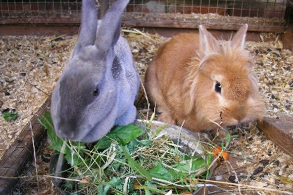 Small Animal Handling and Grooming Experience for Two at Animal Rangers