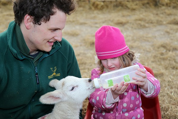 Family Day on The Farm with a Deer Safari and Food at Snettisham Park