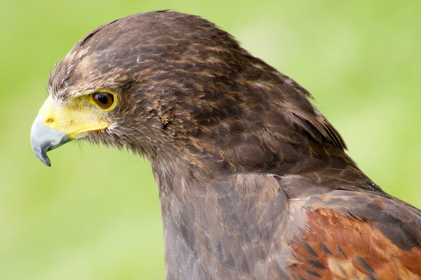 2 For 1 Bird Of Prey Day In Herefordshire