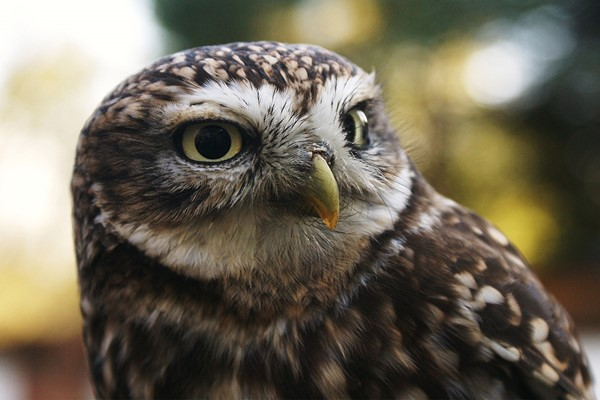 2 For 1 Introduction To Birds Of Prey In Herefordshire