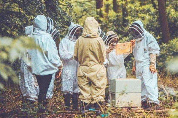 Beekeeping Experience for One at The London Bee Company