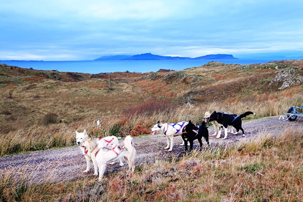 Husky Hiking Experience for One at Dorchar Aile