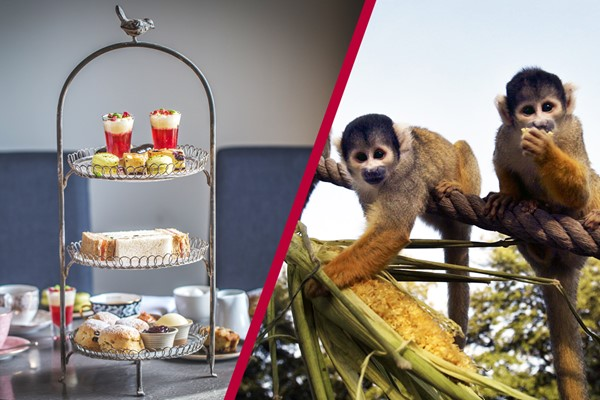 Buy Afternoon Tea with Fizz at Gordon Ramsay's York and Albany and London Zoo for Two