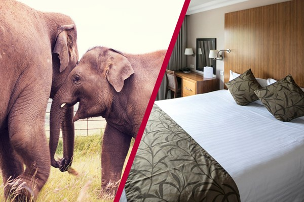 Adult Entry to Whipsnade Zoo with Overnight Stay at Aubrey Park Hotel