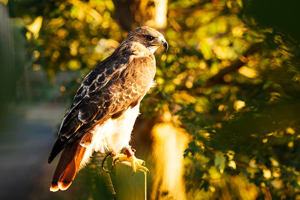 Click to view details and reviews for Two Hour Falconry Experience For Two With Coda Falconry.