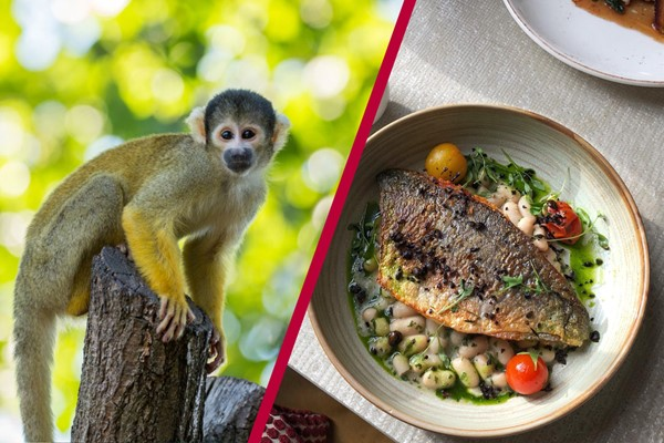 Buy Three Course Meal for Two at Gordon Ramsay's York and Albany and London Zoo