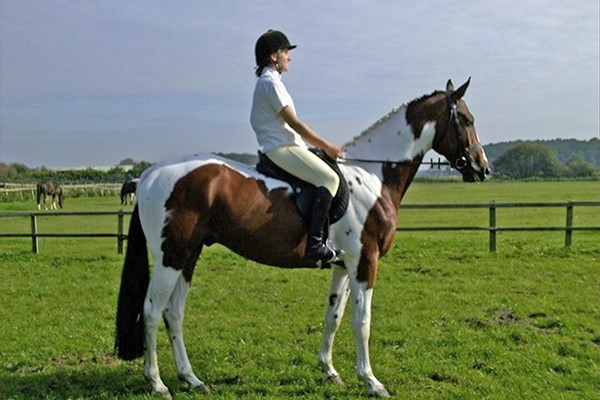 Horse Riding for Two at Halsall Riding Centre