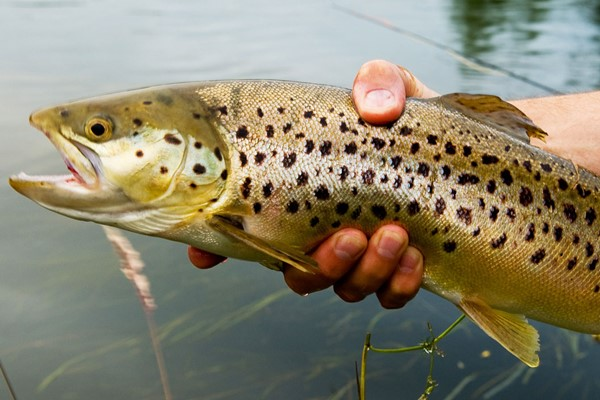 Click to view details and reviews for Introduction To Trout Fly Fishing Experience For One.