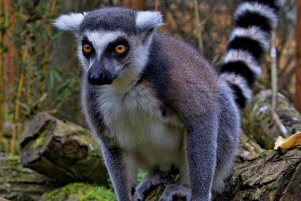 Exotic Zoo Entry and a 30 Minute Lemur Experience for Two