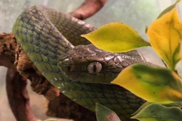 Exotic Zoo Entry and a One Hour Deadly Reptile Experience for Two