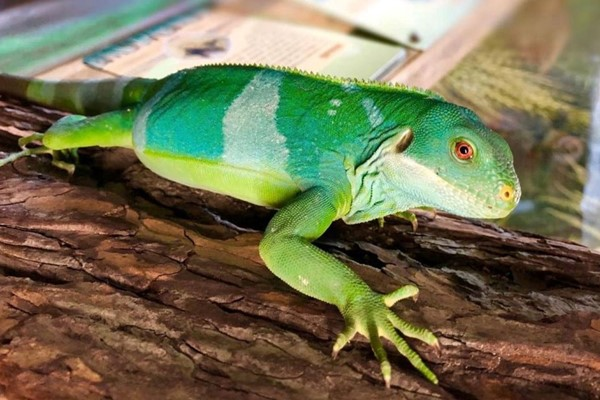 Exotic Zoo Entry and a One Hour Reptile Experience for Two